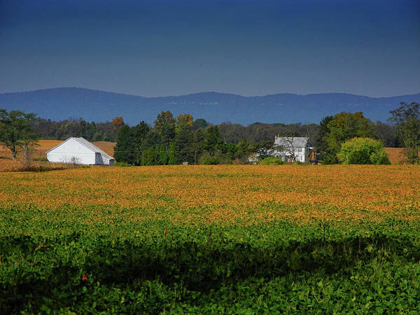 Photograph - Crops Along The Pa At by Raymond Salani III