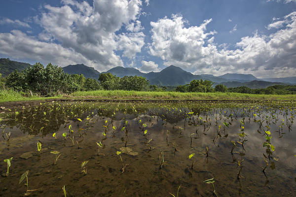 Photograph - Crops On Kauai by Jon Glaser