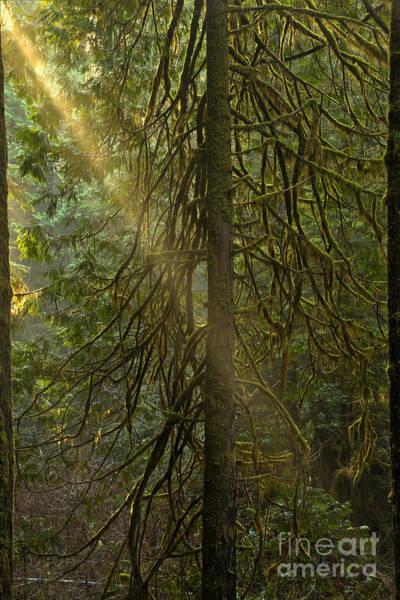 Photograph - Cross Beam by Adam Jewell