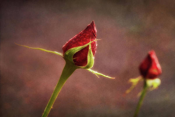Photograph - Cross My Heart by Mary Jo Allen