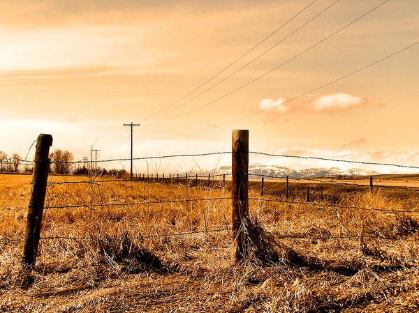 Photograph - Crossed Wires by Susan Kinney
