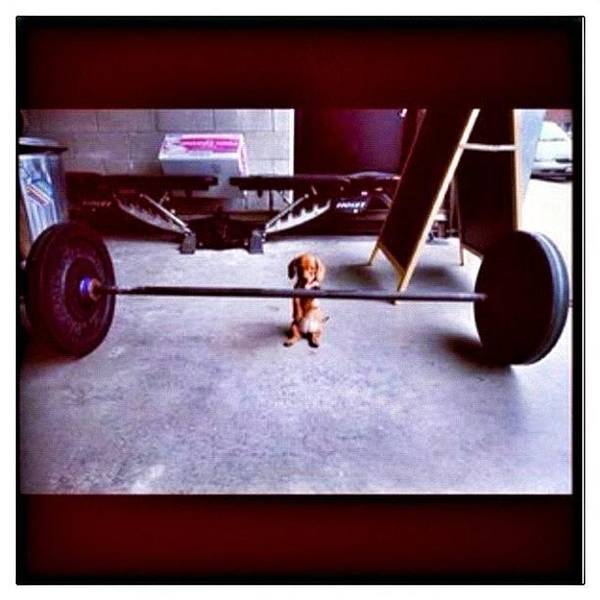 Workout Wall Art - Photograph - #crossfit #crossfitlife  #workout by Woof Glaser