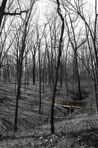 Photograph - Crossing Barren Trees by Dylan Punke