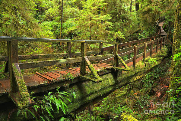 Photograph - Crossing The Rainforest Ravine by Adam Jewell