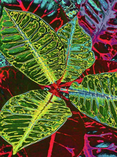Big Island Digital Art - Croton - Deep Green by Kerri Ligatich