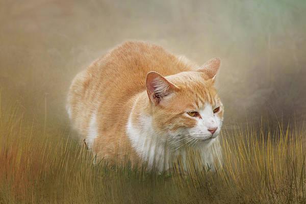 Crouching Digital Art - Crouching In The Grass by Terry Davis