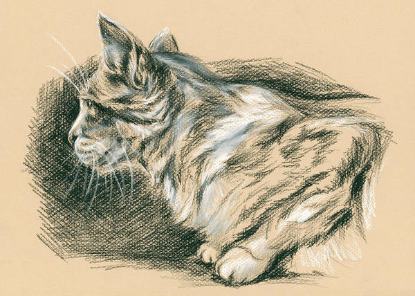 Drawing - Crouching Tabby by MM Anderson