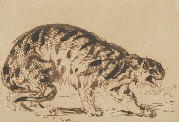 Drawing - Crouching Tiger by Eugene Delacroix