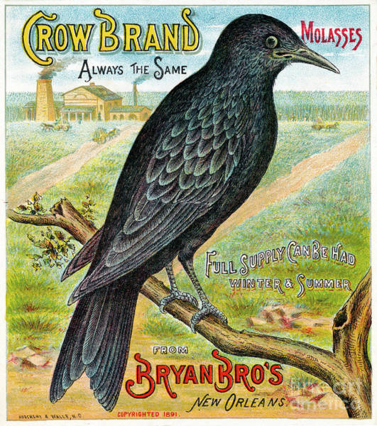 Photograph - Crow Brand Molasses Advertisement - To License For Professional Use Visit Granger.com by Granger