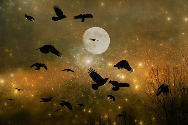 Wall Art - Photograph - Crow In A Golden Wash Of Stars by Gothicrow Images