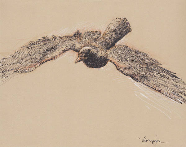 Raven Drawing - Crow In Flight by Tracie Thompson
