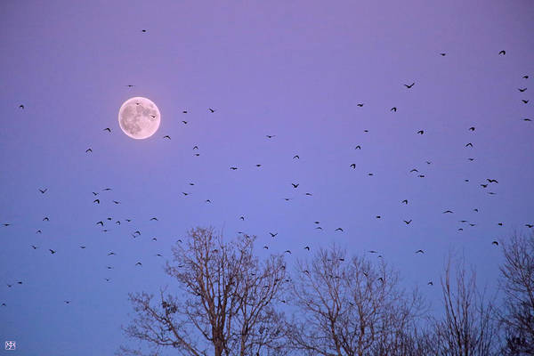 Photograph - Crow Moon by John Meader