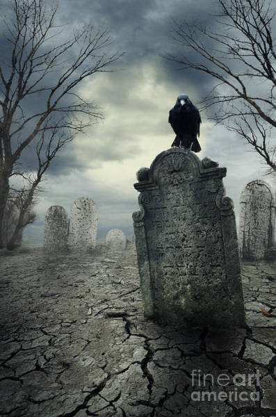 Raven Digital Art - Crow On The Tombstone by Jelena Jovanovic