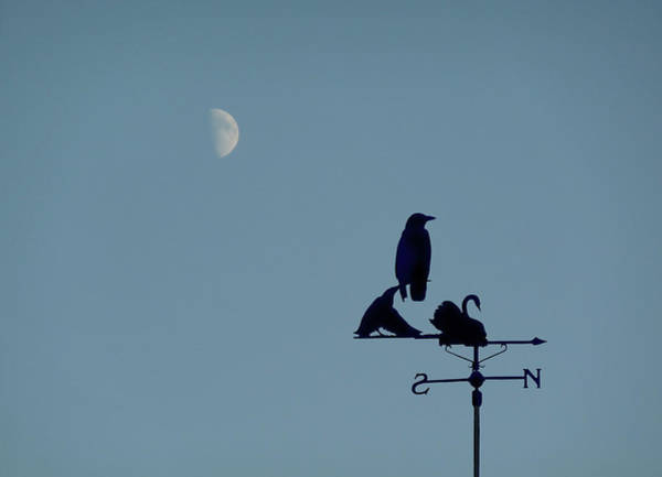Photograph - Crow On Weathervane by Valerie Anne Kelly