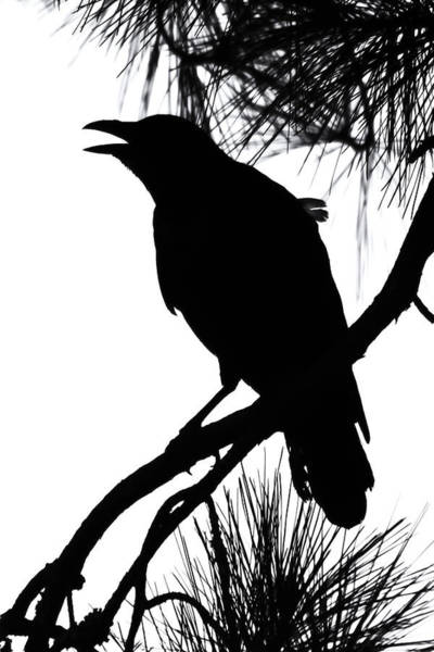 Photograph - Crow Silhouette by Patricia Schaefer