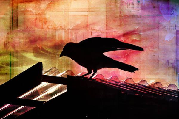 Photograph - Crow Silhouette by Randi Grace Nilsberg