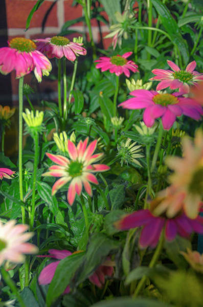 Photograph - Crowded Garden by Bill Cannon