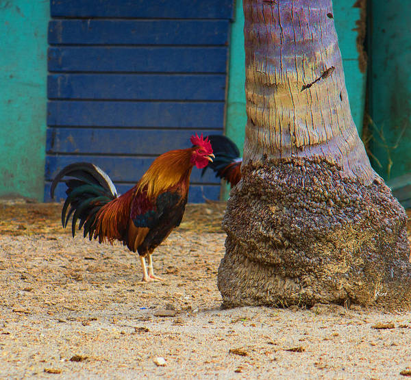 Photograph - Rooster Crowing At A Tree by Roberta Byram