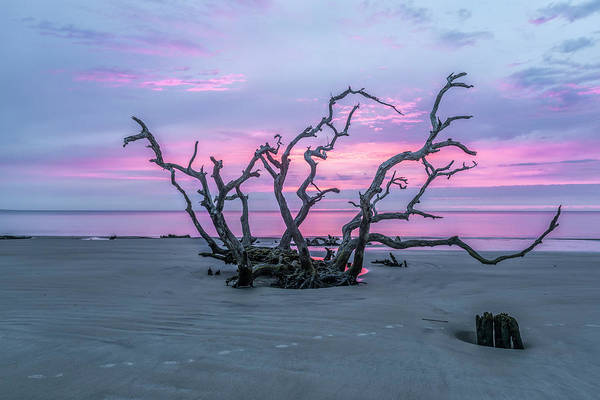 Jekyll Island Photograph - Crown Of Thorns by Jon Glaser