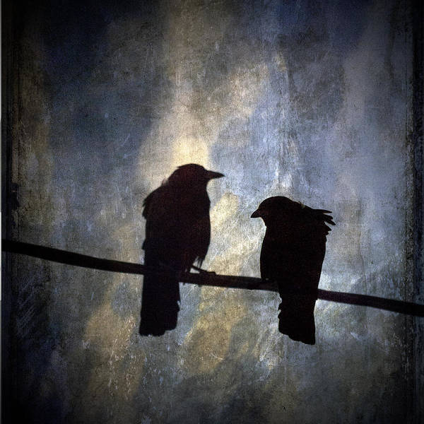 Crows And Sky Reflections Art Print