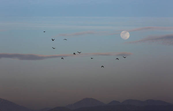 Crows Coming Home To Roost Art Print by Robin Street-Morris