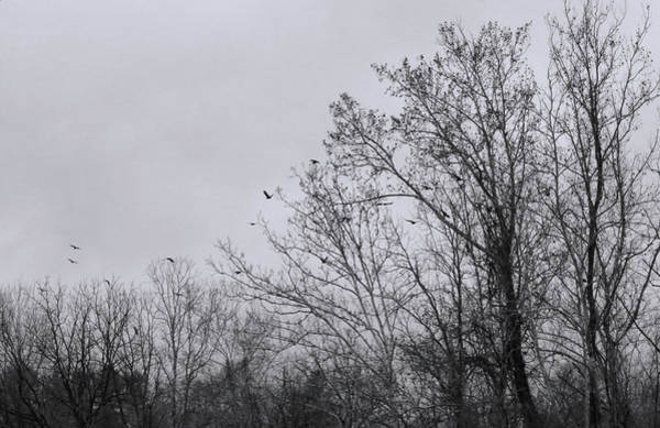 Photograph - Crows Flying From A Roost by Denise Beverly