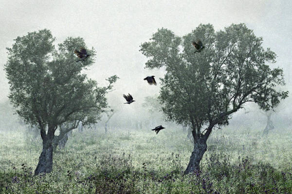 Mist Photograph - Crows In The Mist by S. Amer
