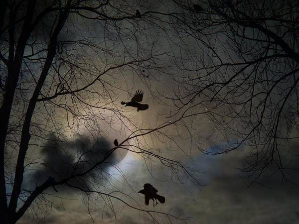 Wall Art - Photograph - Crows Intuition  by Gothicrow Images