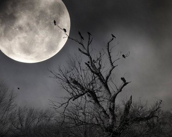 Wall Art - Photograph - Crows Lit By A Full Moon by Gothicrow Images