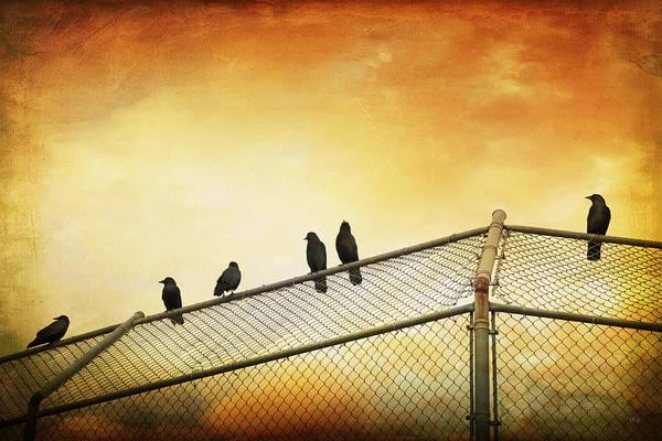 Six Wall Art - Photograph - Crows On The Backstop by Theresa Tahara