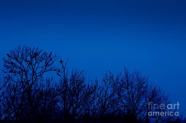 Wall Art - Photograph - Crows On Trees Silhouette by Arletta Cwalina