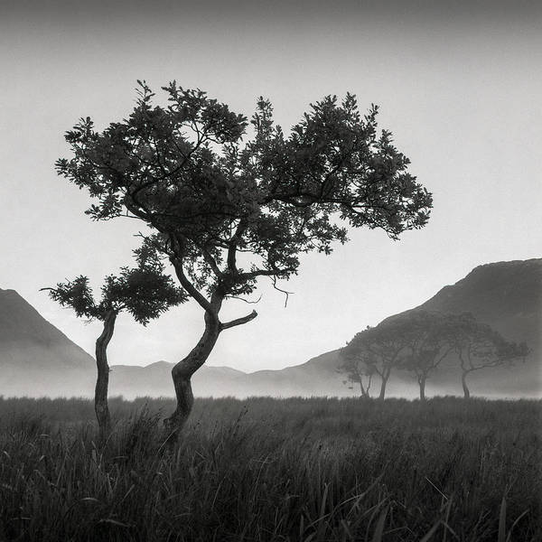 Marshland Photograph - Crummock Water Tree by Dave Bowman
