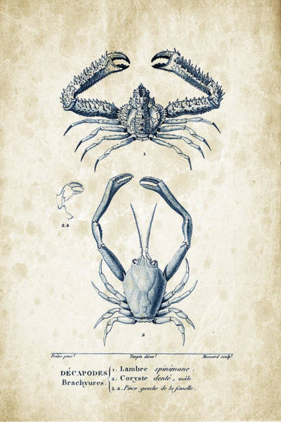 Wall Art - Digital Art - Crustaceans - 1825 - 01 by Aged Pixel