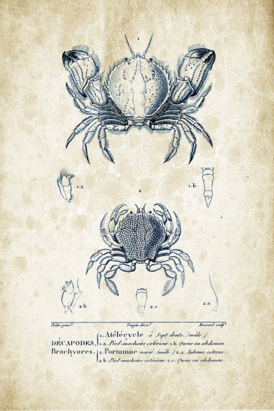 Wall Art - Digital Art - Crustaceans - 1825 - 02 by Aged Pixel