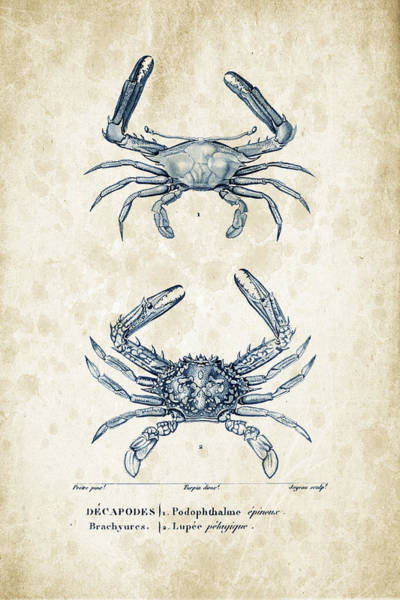 Wall Art - Digital Art - Crustaceans - 1825 - 04 by Aged Pixel