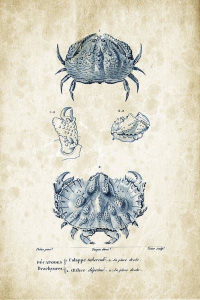 Wall Art - Digital Art - Crustaceans - 1825 - 08 by Aged Pixel