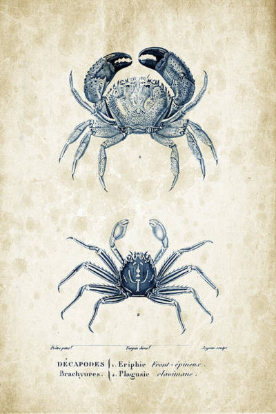 Wall Art - Digital Art - Crustaceans - 1825 - 12 by Aged Pixel