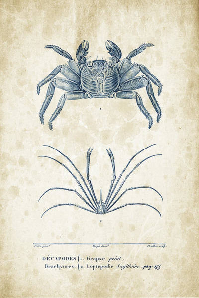Wall Art - Digital Art - Crustaceans - 1825 - 14 by Aged Pixel