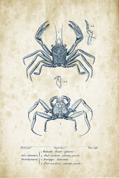 Wall Art - Digital Art - Crustaceans - 1825 - 15 by Aged Pixel