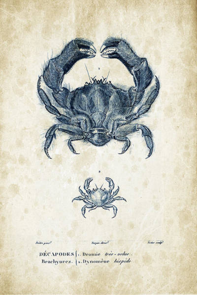 Wall Art - Digital Art - Crustaceans - 1825 - 16 by Aged Pixel