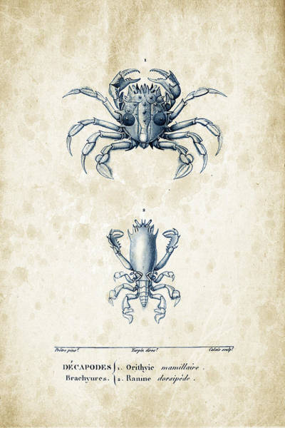 Wall Art - Digital Art - Crustaceans - 1825 - 17 by Aged Pixel