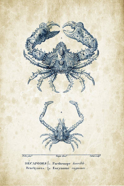 Wall Art - Digital Art - Crustaceans - 1825 - 18 by Aged Pixel