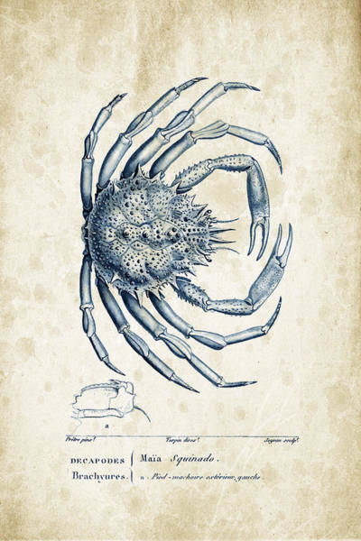 Wall Art - Digital Art - Crustaceans - 1825 - 19 by Aged Pixel