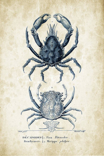 Wall Art - Digital Art - Crustaceans - 1825 - 20 by Aged Pixel