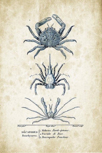 Wall Art - Digital Art - Crustaceans - 1825 - 21 by Aged Pixel