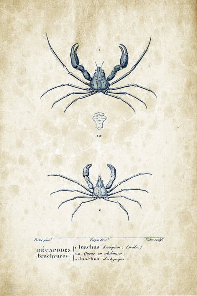 Wall Art - Digital Art - Crustaceans - 1825 - 22 by Aged Pixel