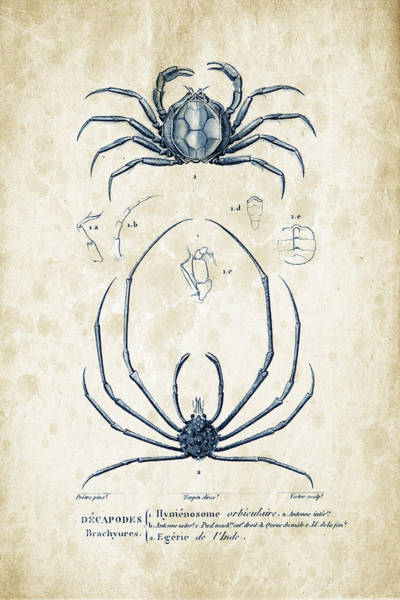 Wall Art - Digital Art - Crustaceans - 1825 - 24 by Aged Pixel