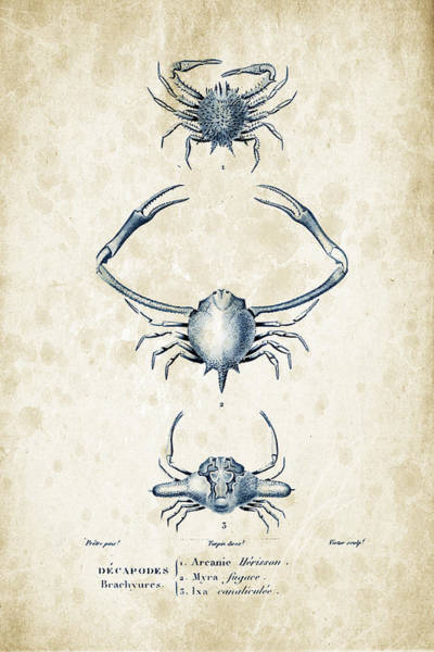 Wall Art - Digital Art - Crustaceans - 1825 - 26 by Aged Pixel
