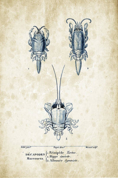 Wall Art - Digital Art - Crustaceans - 1825 - 27 by Aged Pixel