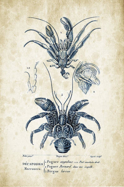 Wall Art - Digital Art - Crustaceans - 1825 - 28 by Aged Pixel
